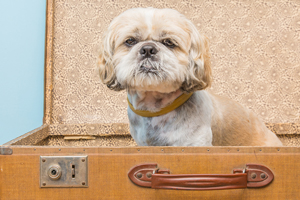 The Route 66 Hotel in Springfield, IL is a pet-friendly hotel.